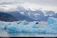 Columbia Glacier calved so much ice that it choked the waters of the Prince William Sound with giant icebergs and can no longer be accessed by boats.