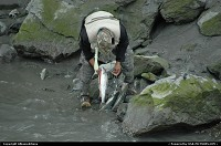 The Kenai River offer the best salmon fishing. For the complete webgallery: www.alaska-editions.nl