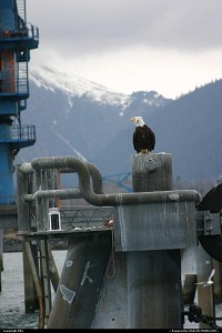 Photo by elki | Seward  eagle, wilderness, harbor