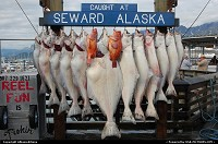 Photo by Albumeditions | Seward  Alaska Seward Sportfishing