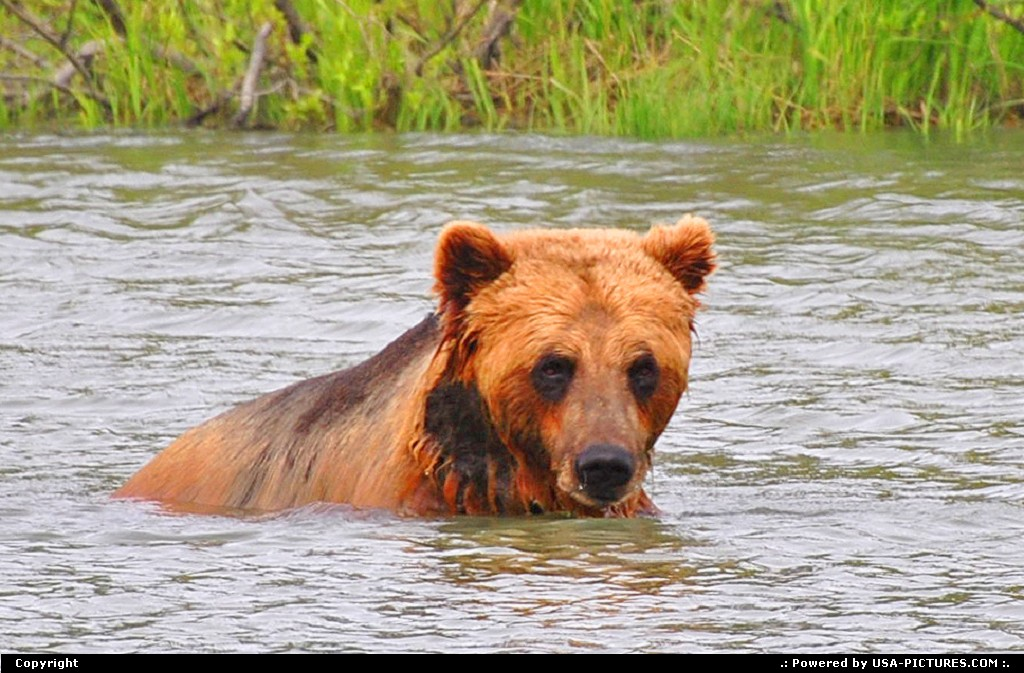 Picture by Albumeditions:Not in a CityAlaskaAlaska, Wildlife