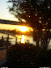 Webbed Sunset