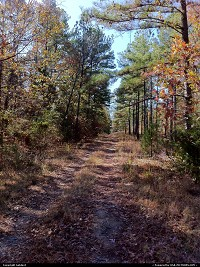 Woods on camp Robinson.