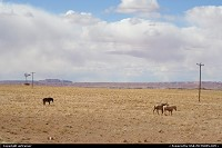 Arizona, Countryside and quiet horses between Chinle and Monument Valley