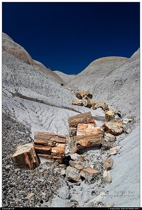 Petrified Forest : -