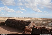 Petrified Forest : Petrified Forest NP