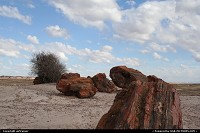 Photo by airtrainer |  Petrified Forest wood, forest
