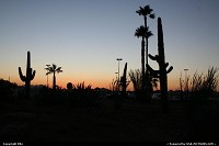 Photo by elki | Tucson  cactus, sunset