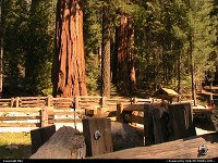 Sequoia : Big trees