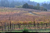 Photo by elki | Glen Ellen  Vineyard Jack London state park