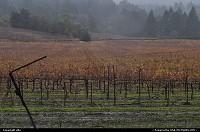Glen Ellen : vineyard at Jack London state park