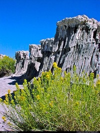 Photo by outofthisnature | Lee Vining  Mono Lake, wild flowers
