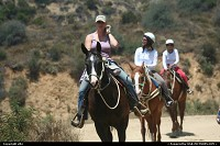 Los Angeles : Horses ride in to hollywood hills.