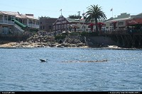 Monterey : Sea Kayak in monterey bay, in the middle of aquatic life !