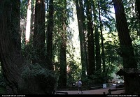 Not in a city : Muir Wood National Monument is a redwood forest located 15 minutes north of San Francisco. Plan a visit while in town!