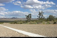 Not in a city : Road tripping countryside, en route to Vegas. Just after Amboy. Some starving Joshua trees to the right.