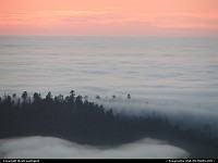 Photo by WestCoastSpirit |  Redwood sunset, forest, clouds, pinetree