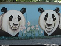 mural in the zoo of san diego