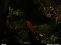 Poisson à l'aquarium