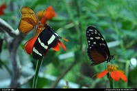 Photo by elki | San Francisco  butterflies rainforest golden gate park san francisco