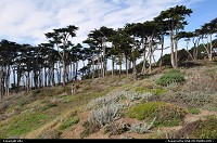 West San Fancisco coast. enjoy the coastal trail, trought ocean beach, lincoln park, baker beach, presidio ... to the bottom of the golden gate bridge !!
