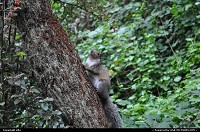 San Francisco : golden gate park wildlife. squirrel