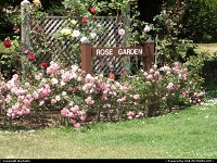 rose garden golden gate park
