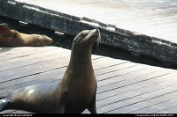 Photo by WestCoastSpirit | San Francisco  pier, sea lion