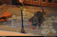 Photo by elki | San Francisco  macys kitten san francisco shop-windows SFSPCA