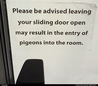 , San Francisco, CA, Advise shot in my hotel room while staying in  San Francisco. I thought they would avised about intruders in general and not only pigeons !! What about seagull ;-)