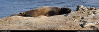 Photo by elki | Santa Cruz  santa cruz, sea lion