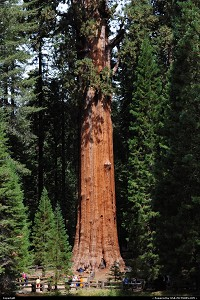 Photo by elki |  Sequoia General sherman Sequoia National Park