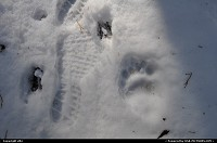 Photo by elki |  Sequoia sequoia park bear footprint