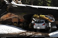 Photo by elki |  Sequoia sequoia national park, tunel log