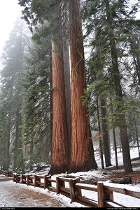 Photo by elki |  Sequoia Sequoia National park