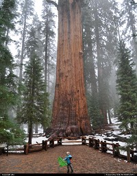 Sequoia National park. General sherman tree