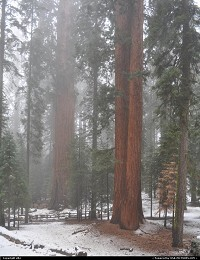 Sequoia National park. General sherman tree at the left of the picturesse