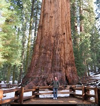 Photo by elki |  Sequoia sequoia national park General sherman tree