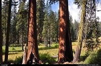 Sequoia trees at crescent meadow. Wonderful hike