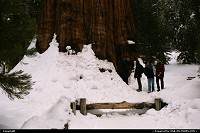 Photo by WestCoastSpirit |  Sequoia sequoi, nps, park, snow, general chairman