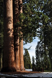 sequoia national park. giant forest