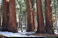 sequoia national park, parker group