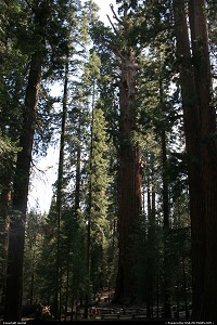 Photo by muriel |  Sequoia