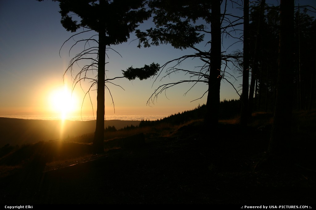 Picture by elki:  California Redwood  sunset, forest