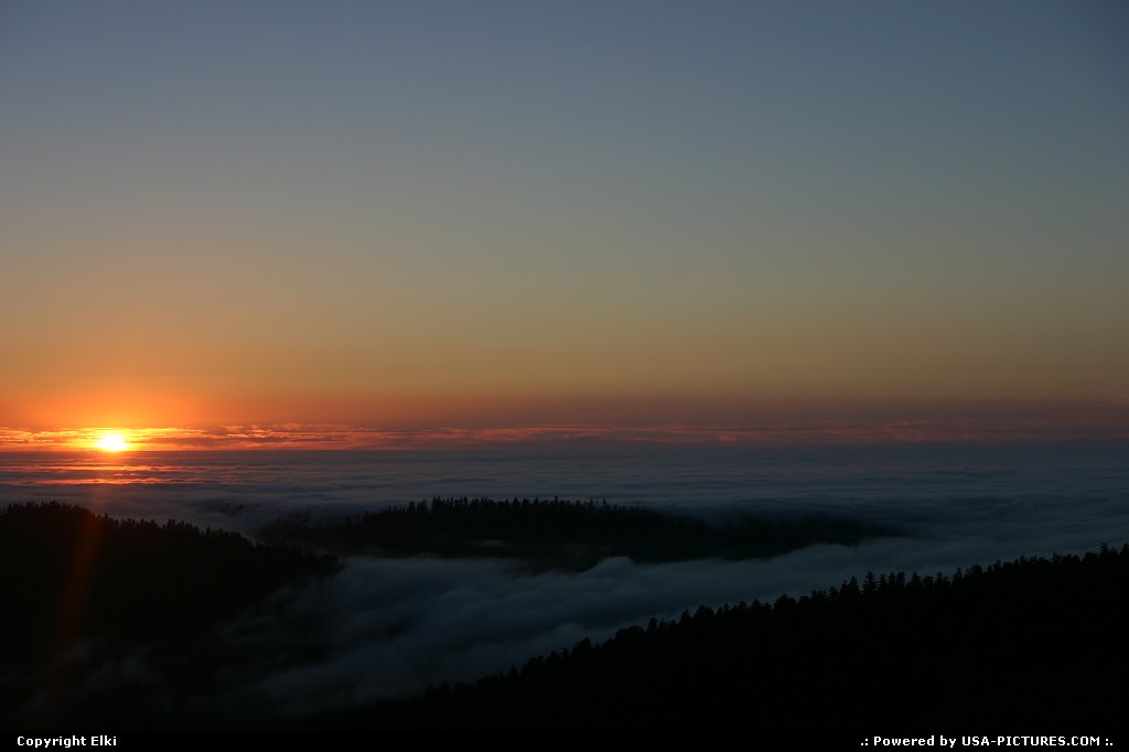 Picture by elki:  California Redwood  sunset, forest, clouds