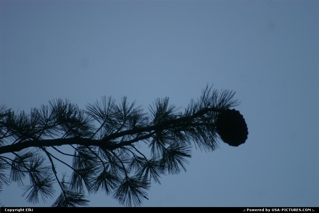 Picture by elki:CaliforniaSequoiatree