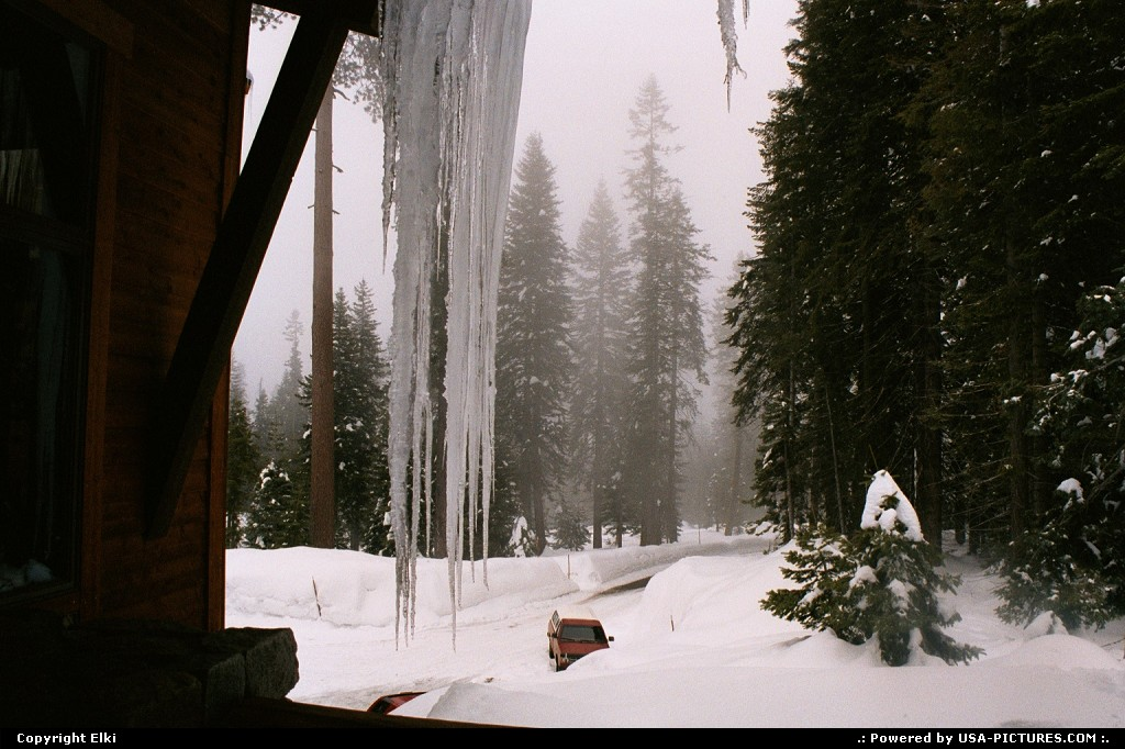 Picture by elki:  California Sequoia  snow, winter