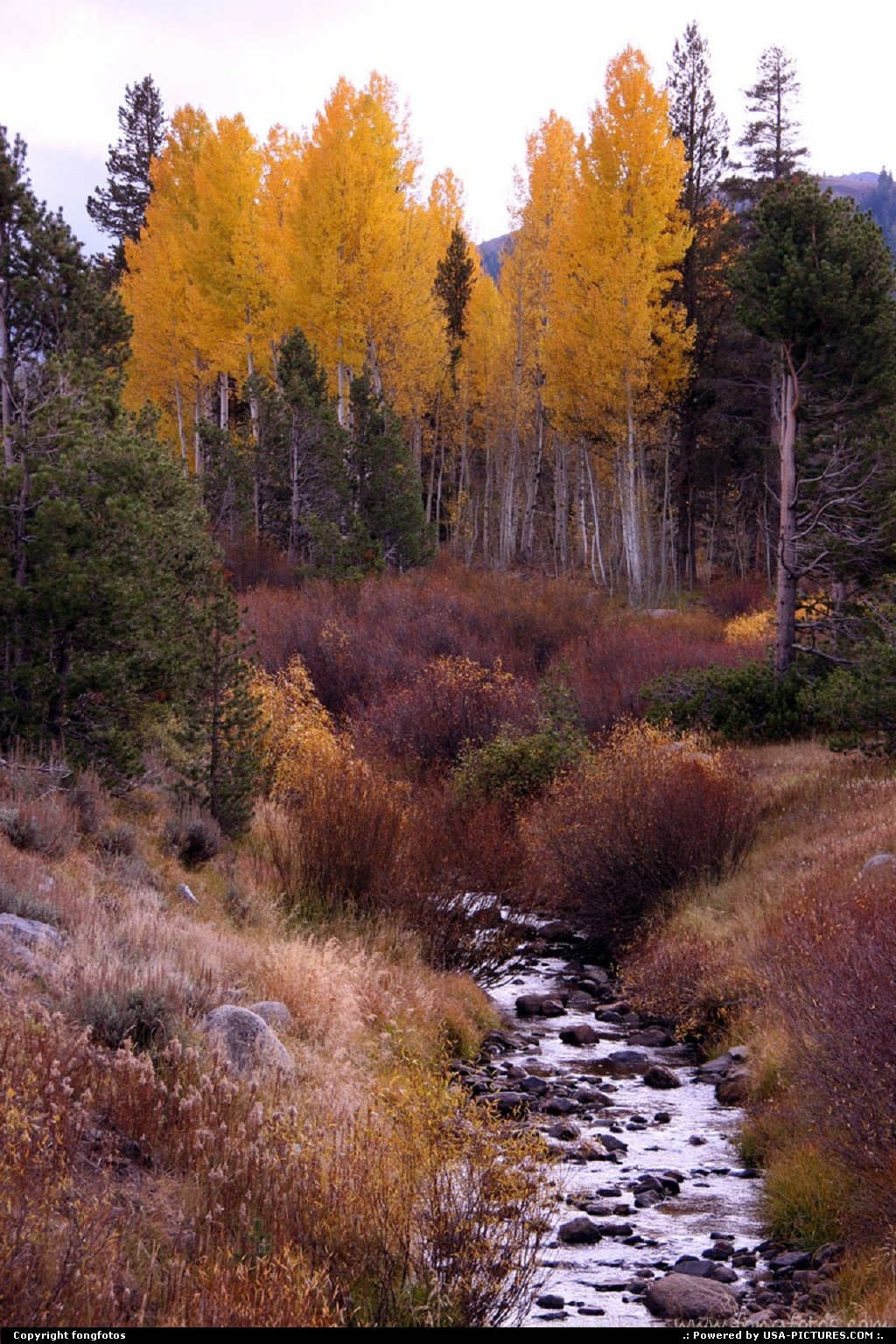Picture by fongfotos:AlpineCaliforniaFall Colors, California, Trees, Nature