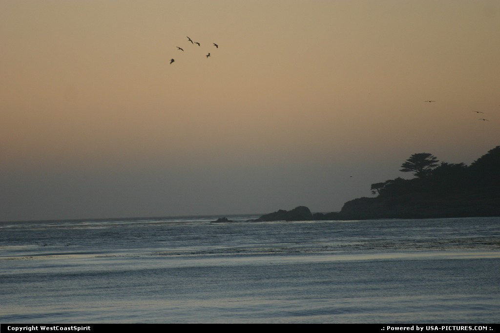 Picture by WestCoastSpirit: Carmel California   beach, sunset, seagull