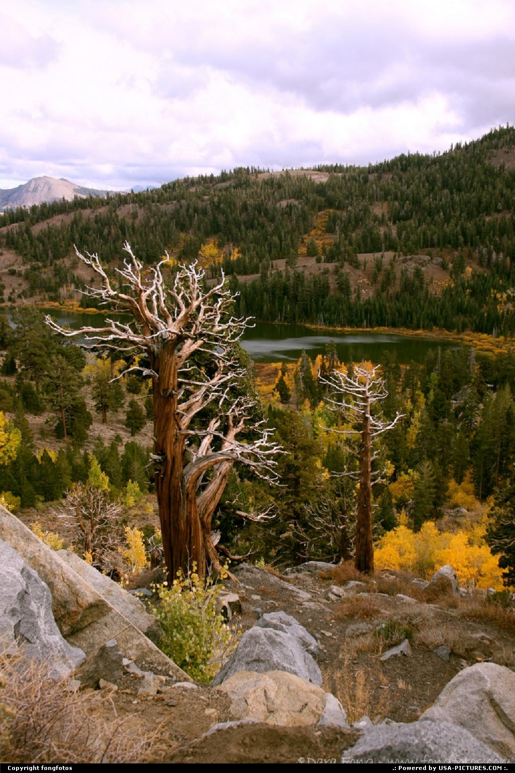 Picture by fongfotos:KirkwoodCaliforniaFall Colors, California, Trees, Nature